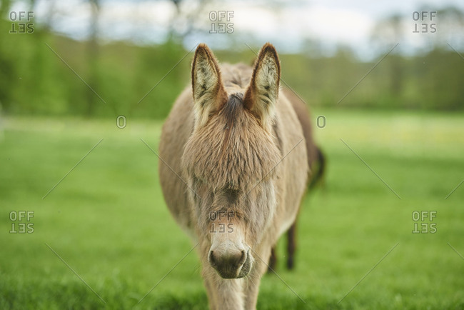 Donkey in a meadow