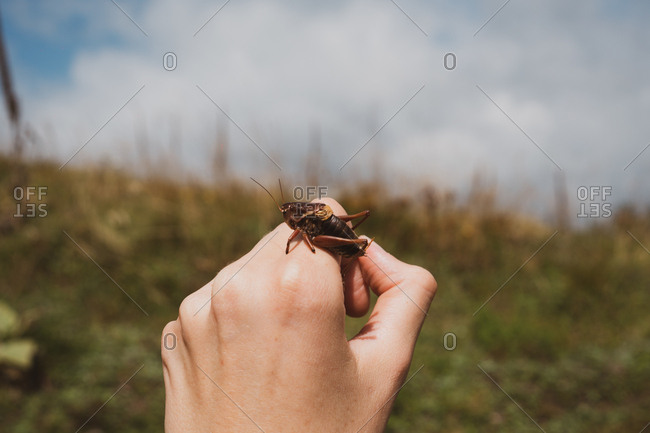 Small bug sitting on hand of anonymous person on blurred background of wonderful nature in Bulgaria, Balkans