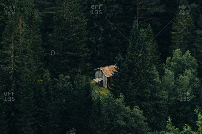 Majestic drone view of small shabby hut standing in middle of conifer forest