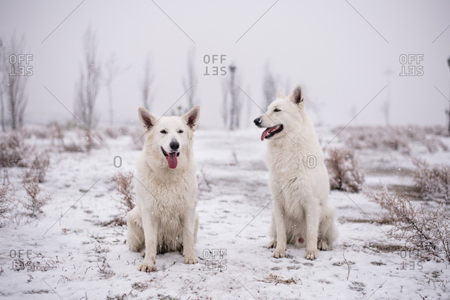 Dogs in snowy park