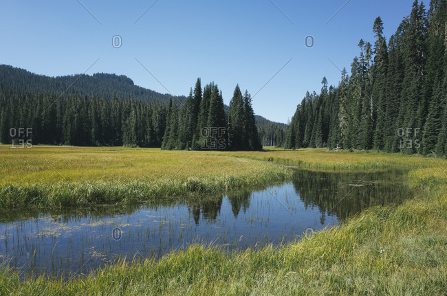Bumping River flowing through alpine meadow and forest along the Pacific Crest Trail in the Cascades range on the Pacific Crest Trail.