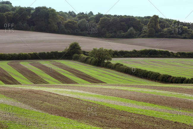 Farmland landscape in August, a rolling landscape with green and brown fields, green crop growing in strips across the ploughed fields after harvest.