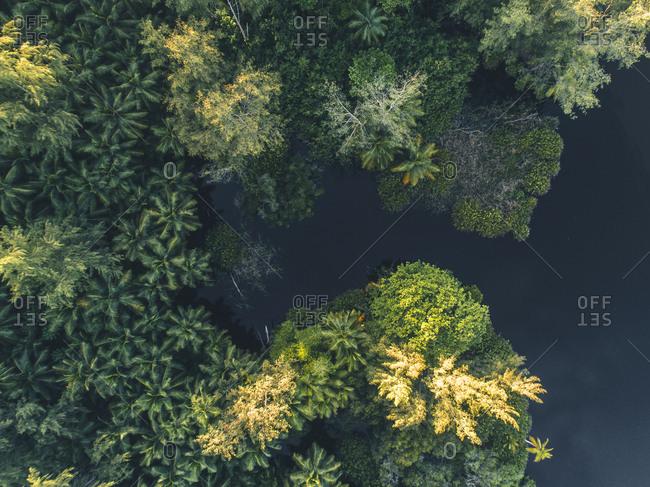 Green foliage on the coast of Seychelles, Africa