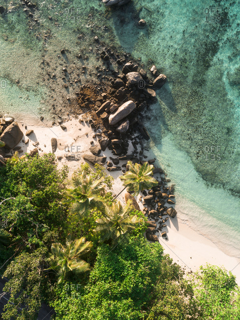 Green foliage and rocks on the coastline of Seychelles, Africa