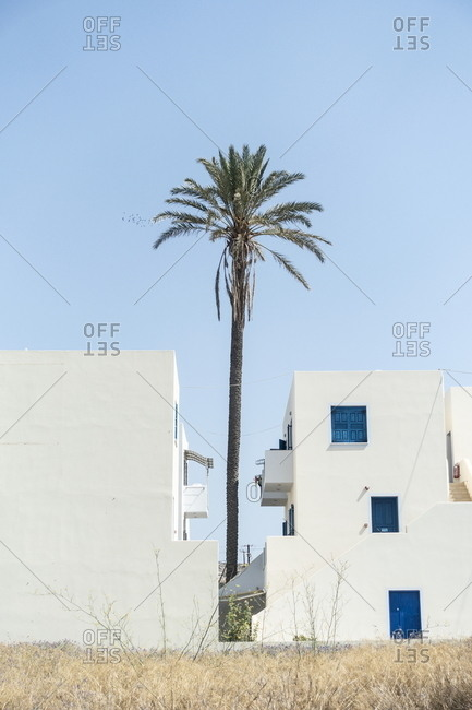 Tall palm tree between buildings in Adamas, Milos, Cyclades, Greece