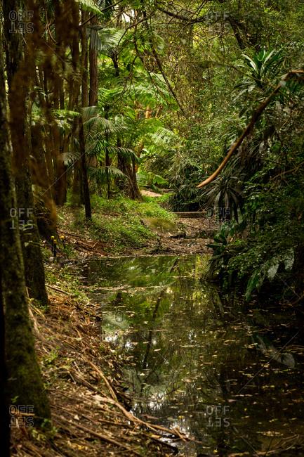 Lush green foliage surrounding river