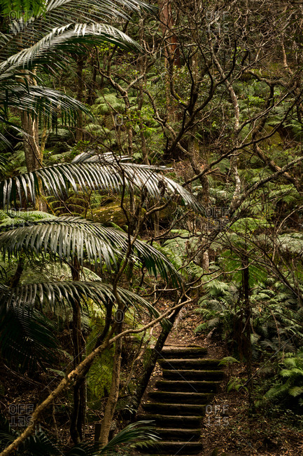 Green foliage surrounding steps in a rainforest