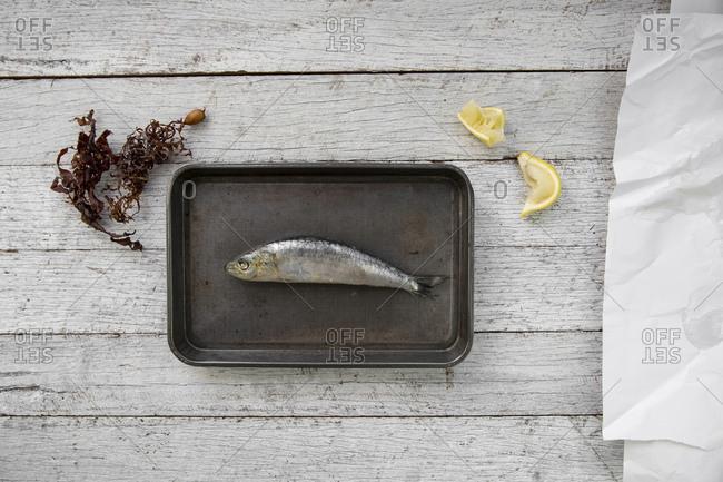Sardine on a small pan
