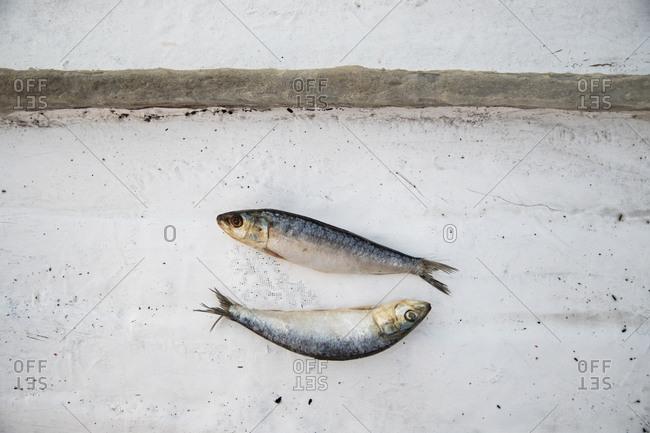 Two sardines on white background