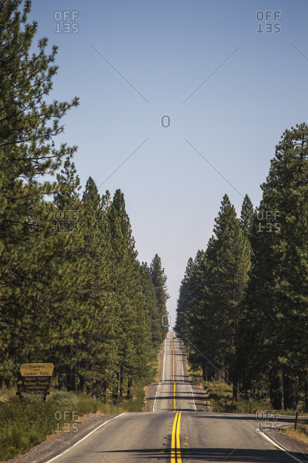 View of road going through forest, Shasta, California, USA