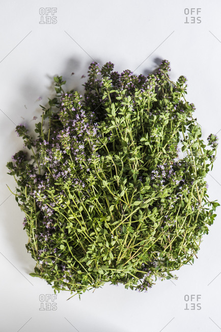 Large bunch of thyme with flowers on white background