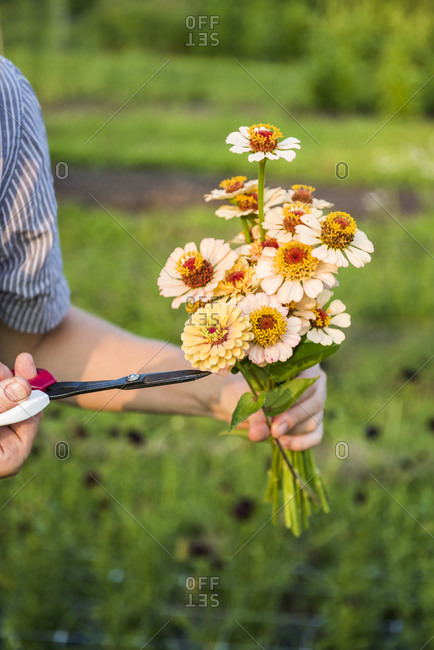Woman holding bouquet of freshly cut flowers and scissors