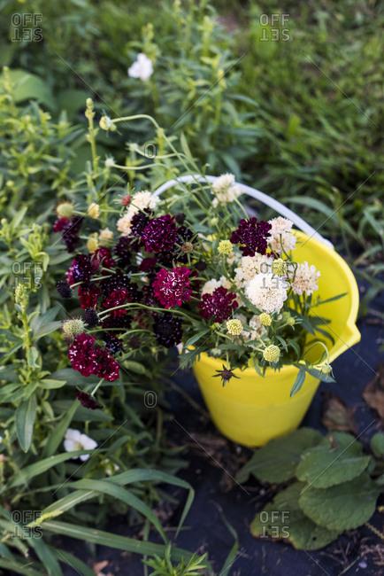 Bucket of freshly cut flowers