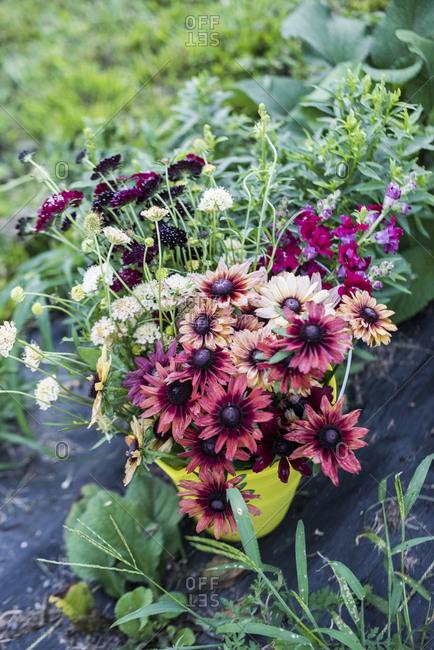 Bucket of fresh cut flowers