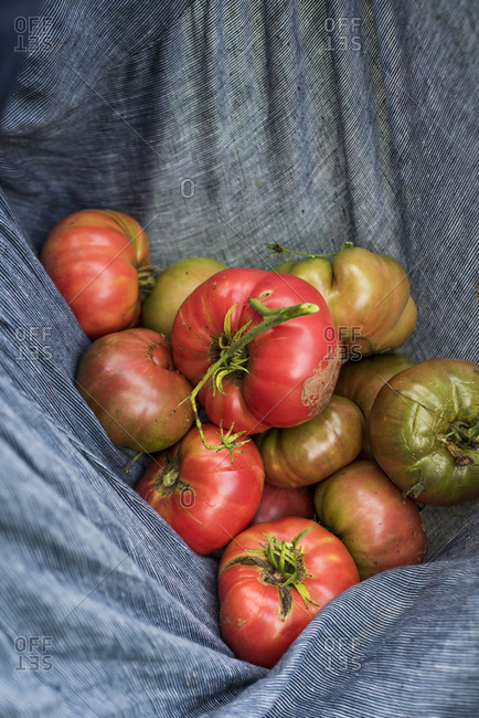 Heirloom tomatoes from a garden in a woman's skirt