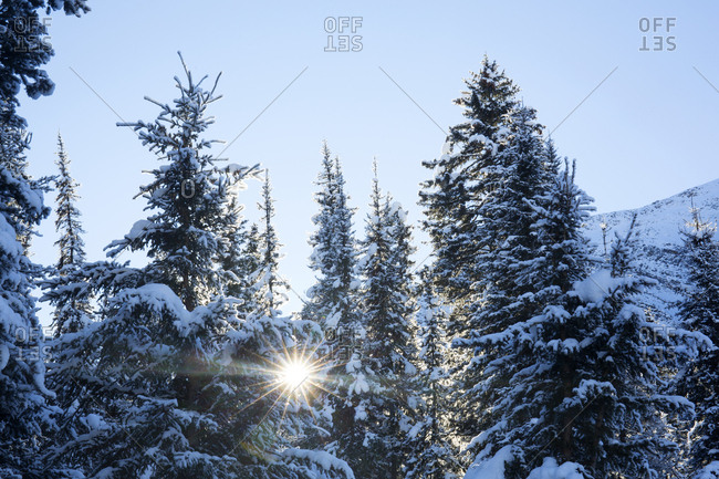 Morning sunburst through forest in Banff National Park in the winter
