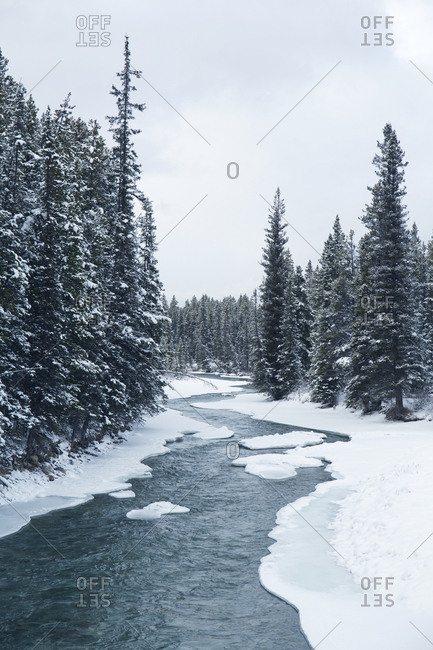 Scenic view of river meandering through forest in Banff National Park in the winter