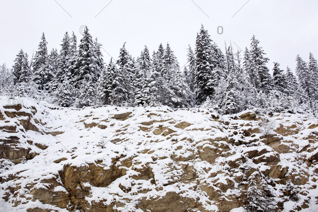 Rocky snow-covered rock bank in forest wilderness