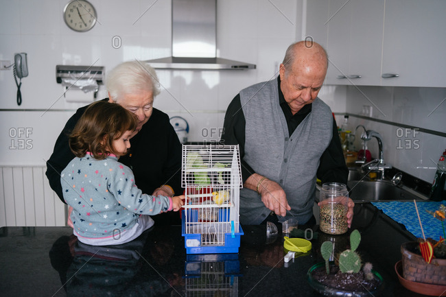 Grandparents and toddler girl taking care of a canary bird inside a cage