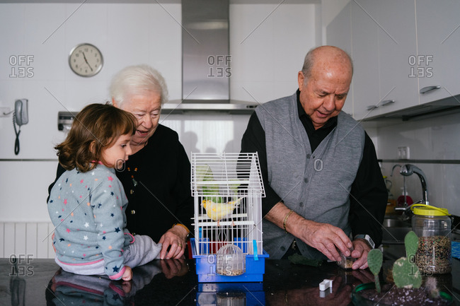 Grandparents and toddler girl taking care of a canary bird in the kitchen