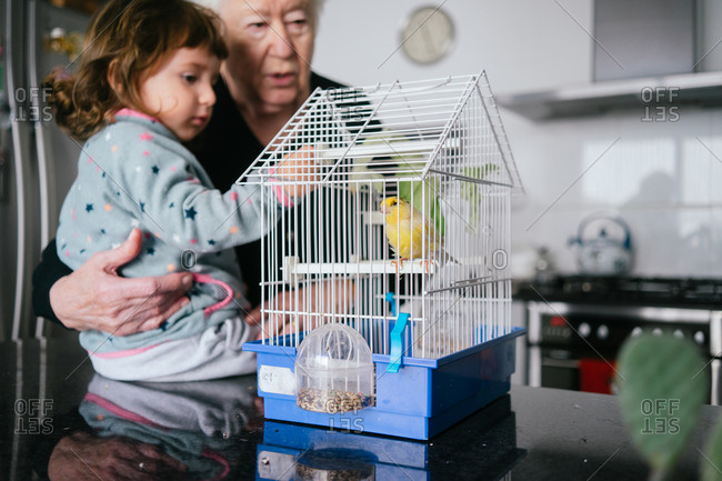 Grandmother and toddler girl observing a canary bird inside a cage