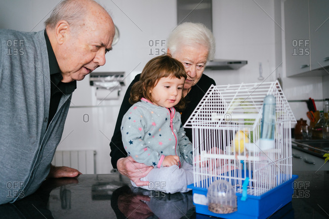 Grandparents and toddler girl looking at a canary bird inside a cage