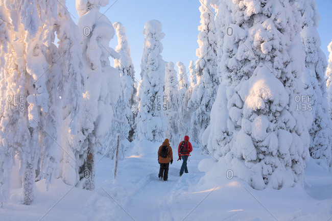 February 1, 2018: Hikers on path in the snowy woods, Riisitunturi National Park, Posio, Lapland, Finland, Europe
