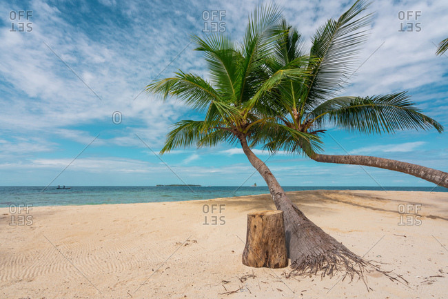 Landscape of beautiful palms on white sandy beach with blue sky and ocean, Panama