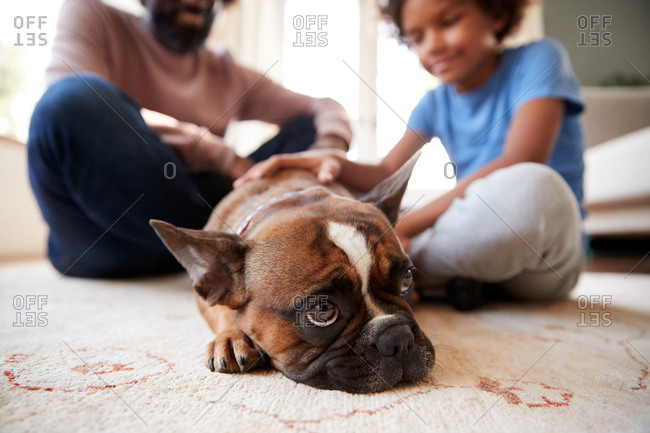 Close up of pet dog lying on the floor in the living room, in background father and son sitting on the floor and smiling, portrait