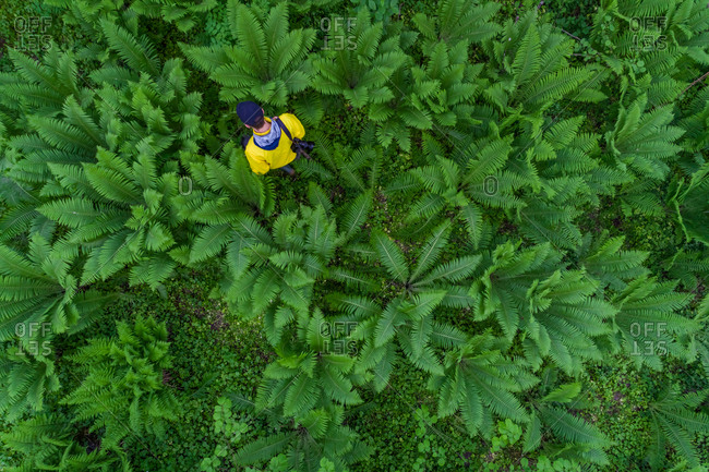 Aerial view man alone on forest in Estonia.