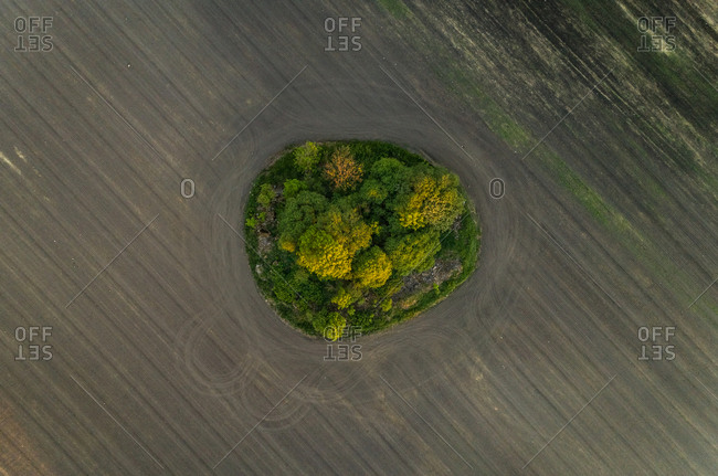 Aerial view forest in the middle of meadow field, Estonia.