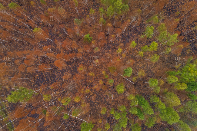 Aerial view of forest in Estonia.