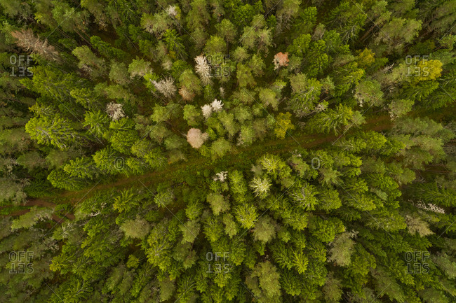 Aerial view of dirty road crossing forest in Forby on Vormsi island, Estonia