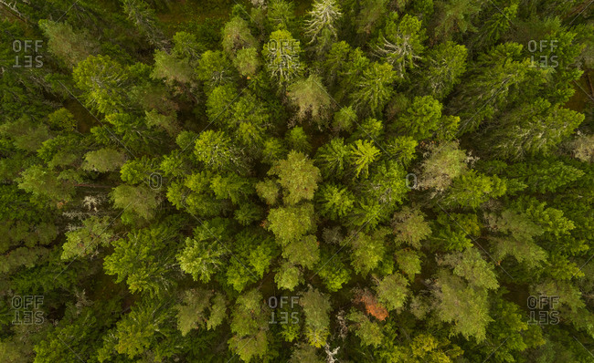 Aerial view of forest in Forby on Vormsi island, Estonia