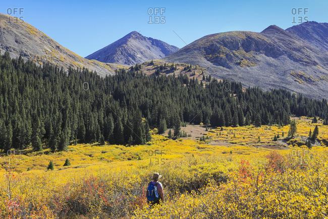 Woman hiking during autumn at Mayflower Gulch, Colorado