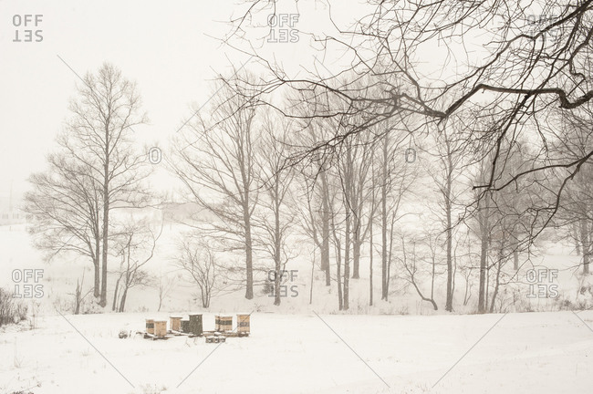 Beehives in a snowy field