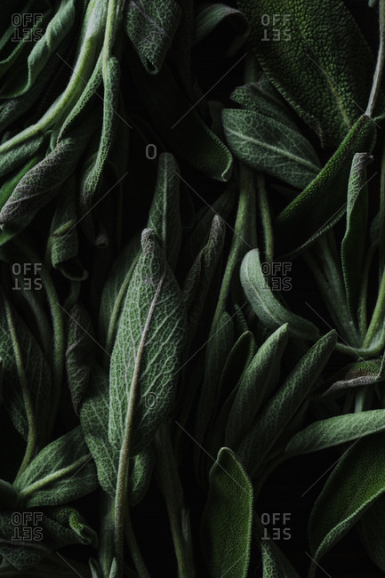 Fresh culinary sage leaves close up view