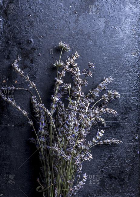 Lavender plants on black background