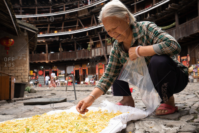 TOLOU, HAINAN, CHINA - JUNE 14, 208: Elderly Hakka female with grey hair in summer checkered shirt sitting on hunkers with plastic bag and collecting bright herbs drying on cloth on stone pavement in traditional Chinese tulou in Hainan