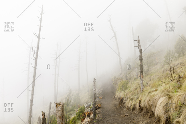 Foggy hiking trail in Acatenango, Guatemala
