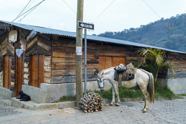 May 10, 2017: Horse next to bundle of sticks in San Juan, Guatemala