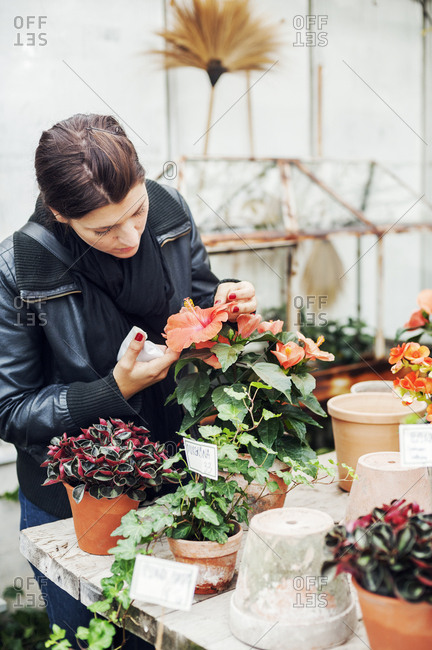 Young woman potting plants in a plant nursery in Sweden