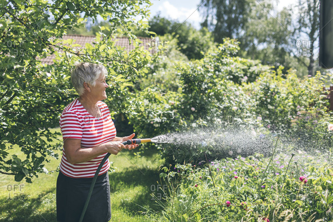 Senior woman watering garden with hose
