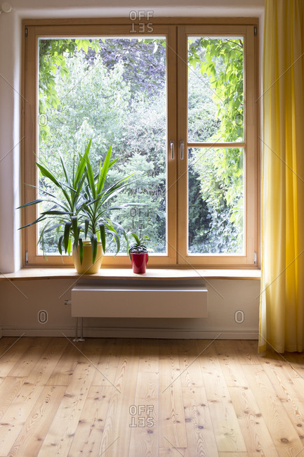 Potted plants at window sill