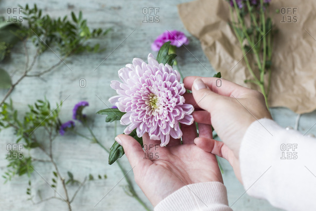 Woman\'s hands holding pink flower head