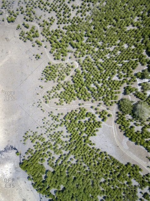 Indonesia- Aerial view of Lombok- paths and bushes