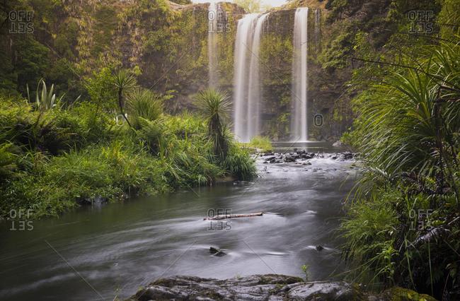 New Zealand- North Island- Northland- Whangarei Falls