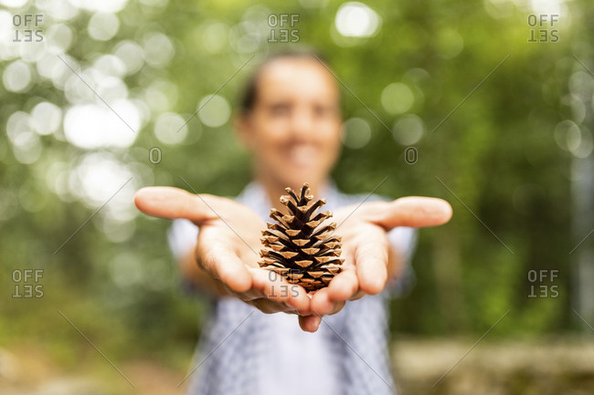 Pine cone in hands of a woman