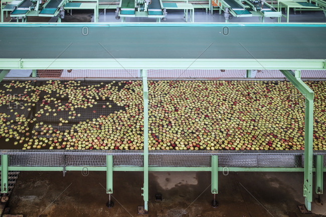 Apples in factory being washed