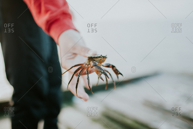 Close-up of a child holding a crab